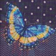 ROMA BUTTERFLY SCARF